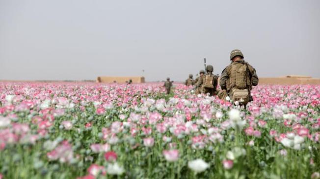Marines-poppy-field-afghanistan-777x437
