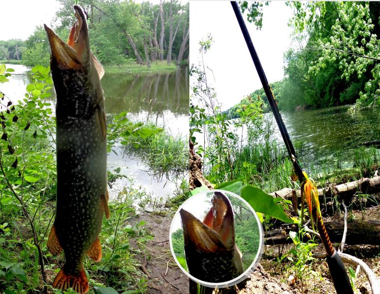 Northern Pike of the Summer